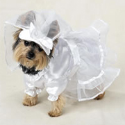 Dog Weddiing Dress